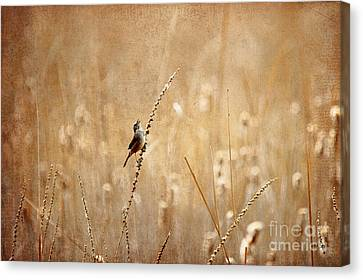 Canadian Marsh Canvas Print - All Rejoicing by Lois Bryan