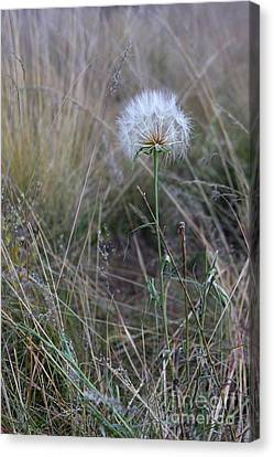 Canvas Print featuring the photograph All The Small Things by Ruth Jolly