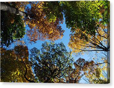 All The Trees Of The Forest Canvas Print by Richard Bryce and Family