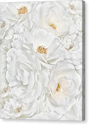 All The White Roses  Canvas Print