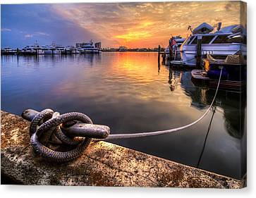 All Tied Up Canvas Print by Debra and Dave Vanderlaan