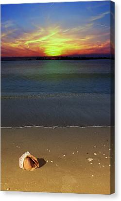 All Washed Up Canvas Print by Regina  Williams