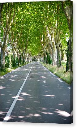 Allee Of Trees, St.-remy-de-provence Canvas Print by Panoramic Images