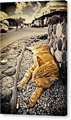 Alley Cat Siesta In Grunge Canvas Print by Meirion Matthias
