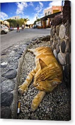 Canvas Print featuring the photograph Alley Cat Siesta by Meirion Matthias