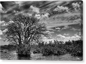 Canvas Print featuring the photograph Alligator Country by Geraldine Alexander