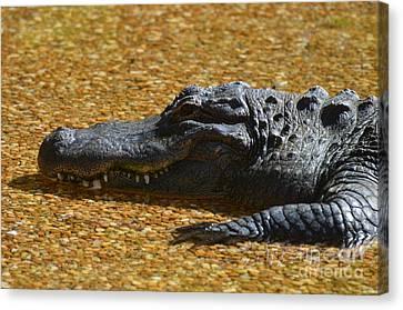 Alligator Canvas Print by DejaVu Designs