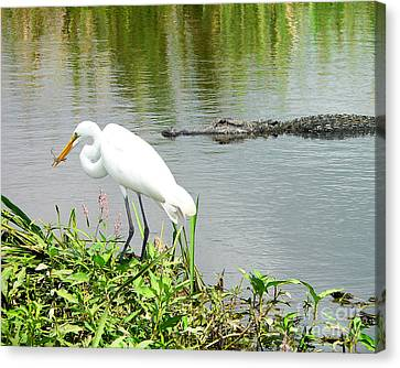 Alligator Egret And Shrimp Canvas Print by Al Powell Photography USA