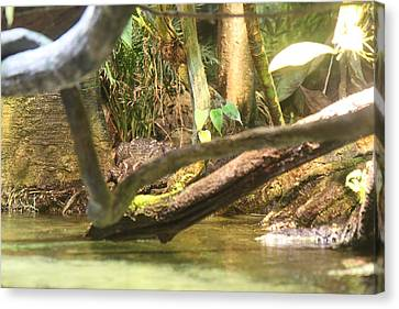 Alligator - National Aquarium In Baltimore Md - 12122 Canvas Print by DC Photographer