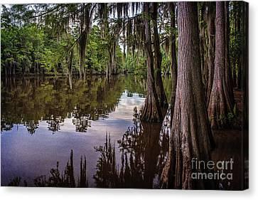 Alligator Swamp On Caddo Lake Canvas Print