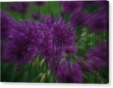 Allium Double Exposure Canvas Print
