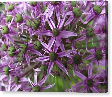 Canvas Print featuring the photograph Allium by Gene Cyr