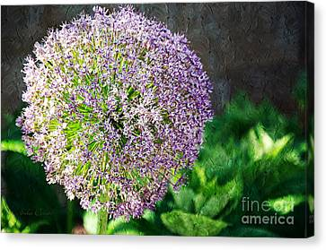Allium Hollandicum Purple Sensation Painterly Canvas Print by Andee Design