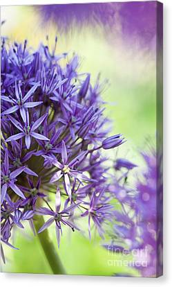 Anther Canvas Print - Allium Globemaster Abstract by Tim Gainey