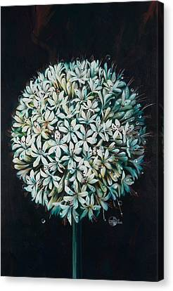 Allium Canvas Print by Lynette Yencho