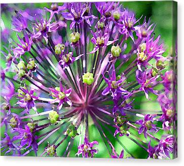 Alliums Canvas Print - Allium Series - Close Up by Moon Stumpp