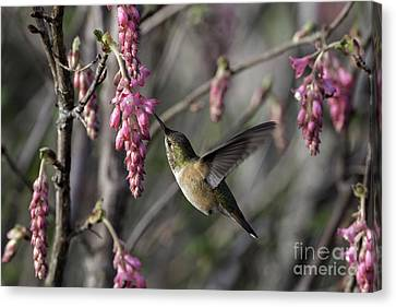 Almost Spring Canvas Print by Tim Moore