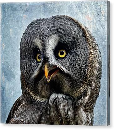 Allocco Della Lapponia - Tawny Owl Of Lapland Canvas Print by Alfio Finocchiaro