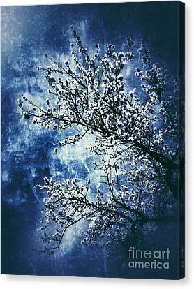 Almond Tree #2 Canvas Print by Angela Bruno