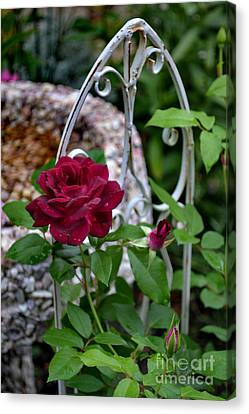 Almost A Perfect Rose Canvas Print by Eva Thomas