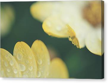 Dew Drops Canvas Print - Almost Close Enough To Touch by Laurie Search