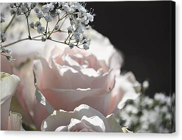 Almost White Roses Canvas Print