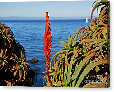 Aloe Arborescens Flowering At Pacific Grove Canvas Print by Susan Wiedmann