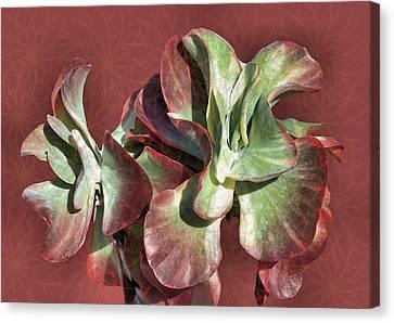 Aloe Design Canvas Print by Rosalie Scanlon