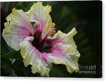 Aloha Aloalo Tropical Hibiscus Haiku Maui Hawaii Canvas Print by Sharon Mau