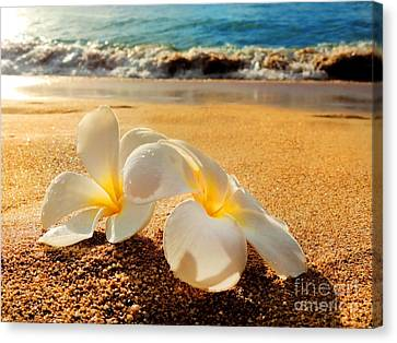 Canvas Print featuring the photograph Aloha by Kristine Merc