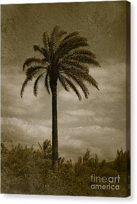 Aloha Palm - No.2047 Canvas Print by Joe Finney