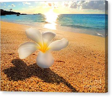 Aloha Paradise Canvas Print