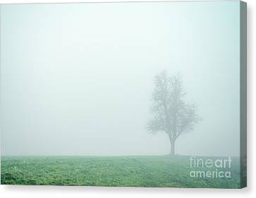 Alone In The Fog - Green Canvas Print by Hannes Cmarits