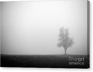 Alone In The Fog - Bw Canvas Print by Hannes Cmarits