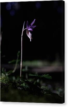 Canvas Print featuring the photograph Alone In The Forest by Betty Depee