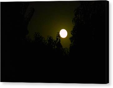 Canvas Print featuring the photograph Alone In The Night by Tamara Bettencourt