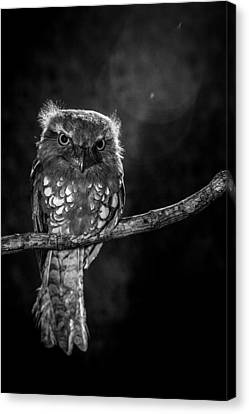 Alone In The Night Canvas Print by Wilianto