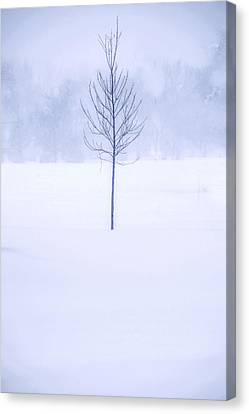 Alone In The Snow Canvas Print by Andrew Soundarajan