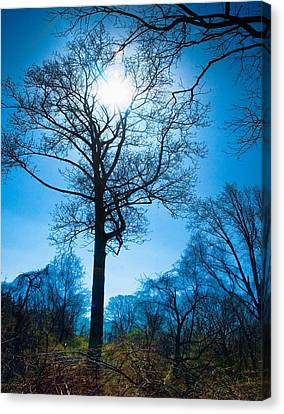 Canvas Print featuring the photograph Alone In The Woods by Robert Culver
