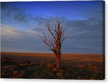 Canvas Print featuring the photograph Alone Yet Not Alone by Lynn Hopwood