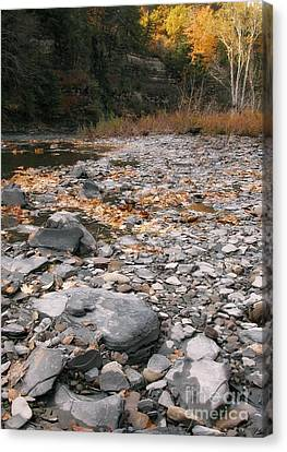 Along Eighteen Mile Creek Canvas Print