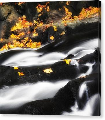 Autumn Landscape Canvas Print - Along The Autumn Stream Square by Bill Wakeley
