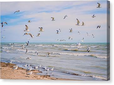 Along The Beach Canvas Print