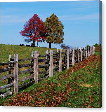 Along The Fence Canvas Print by Eric Liller