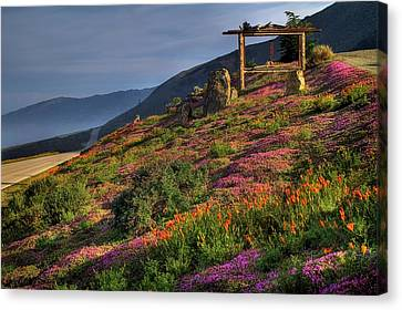 Along The Pacific Highway Canvas Print by Donna Kennedy