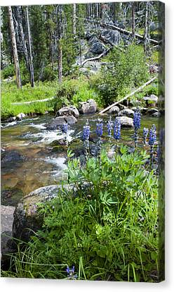 Along The River Canvas Print by Fran Riley