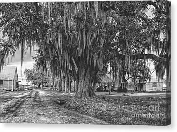 Along The River Road Near Vacherie La Canvas Print by Kathleen K Parker
