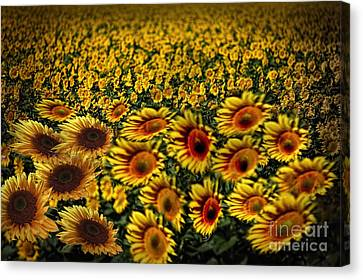 Along With The Wind Canvas Print