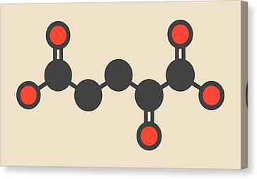 Alpha-ketoglutaric Acid Molecule Canvas Print