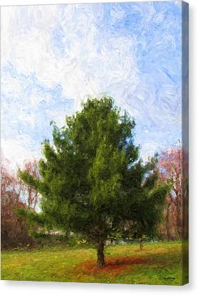 Alpha Spring Pine Canvas Print by Spyder Webb